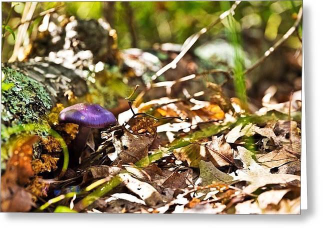 Purple Mushrooms Photographs Greeting Cards - Fall Shroom Greeting Card by Jonathon Shipman