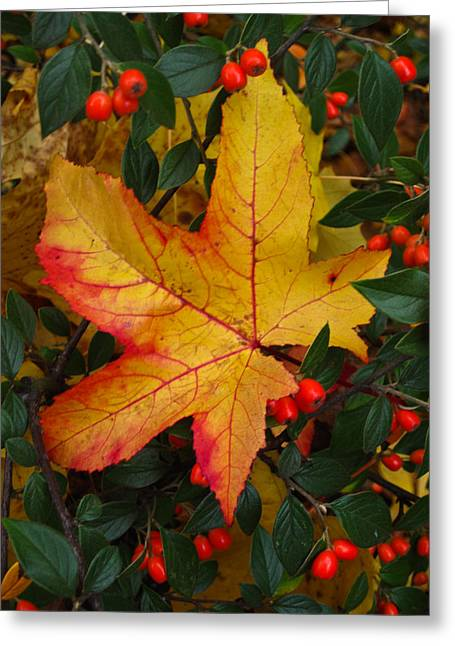 Red And Gold Leaves Greeting Cards - Fall Splendor Greeting Card by Cheryl Perin