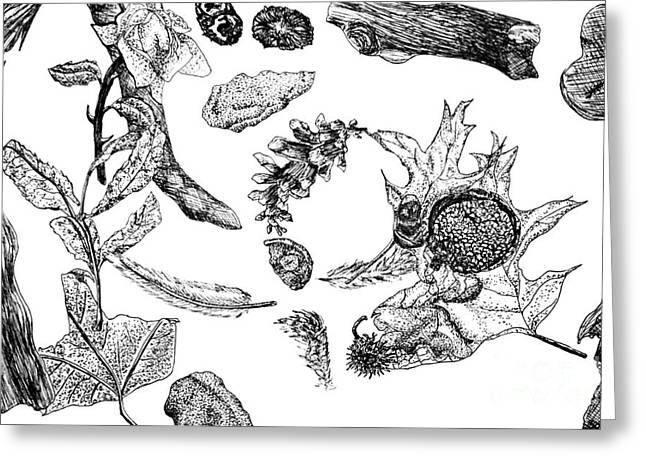 Forest Floor Drawings Greeting Cards - Fall Still Life Greeting Card by J M Lister