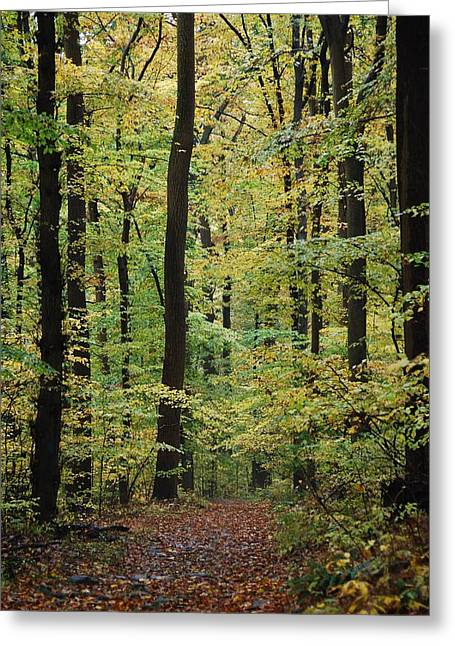 Haverford College Photographs Greeting Cards - Fall Trail Greeting Card by Judy Gallagher