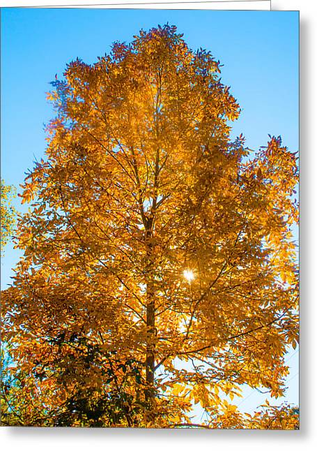 Alabaster Greeting Cards - Fall Tree Greeting Card by Parker Cunningham