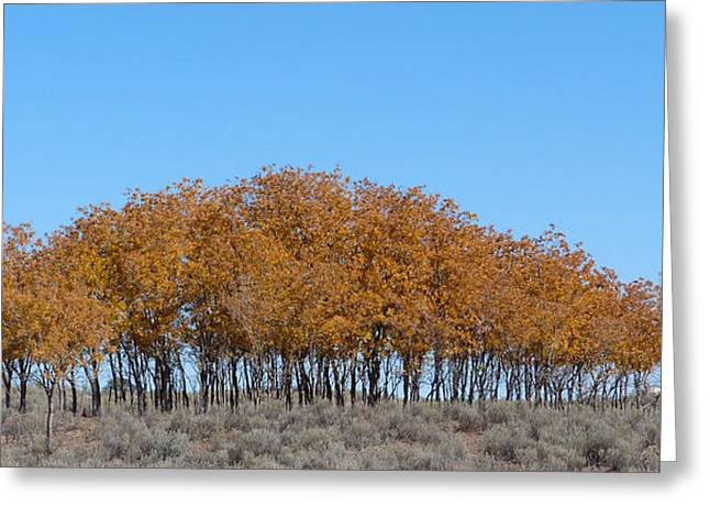 Fall Photographs Paintings Greeting Cards - Fall Trees 2 Greeting Card by Susan Porter