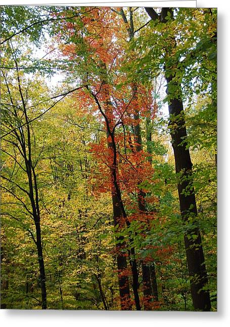 Haverford College Photographs Greeting Cards - Fall Trees Greeting Card by Judy Gallagher
