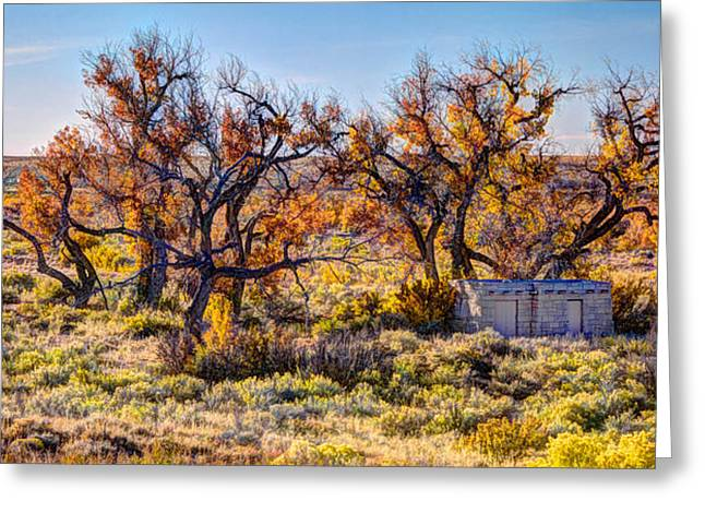 The Petrified Forest Greeting Cards - Fall Trees Greeting Card by Lena Sandoval-Stockley