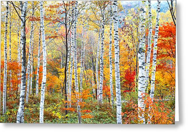 Colorful Photography Greeting Cards - Fall Trees, Shinhodaka, Gifu, Japan Greeting Card by Panoramic Images