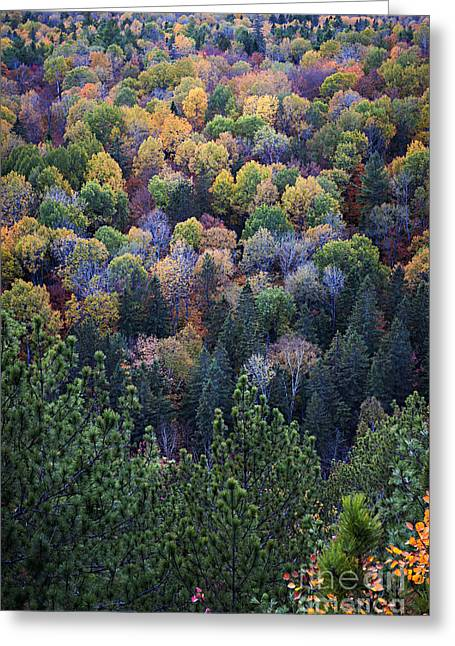 Turning Leaves Photographs Greeting Cards - Fall treetops at Lookout Greeting Card by Elena Elisseeva