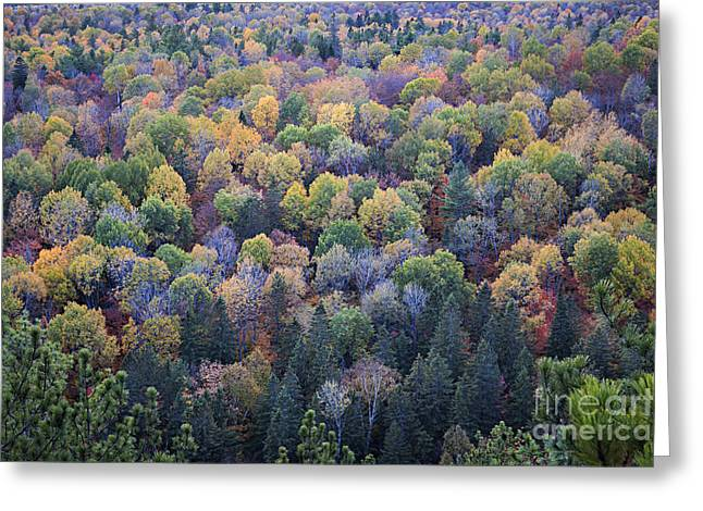 Turning Leaves Photographs Greeting Cards - Fall treetops Greeting Card by Elena Elisseeva