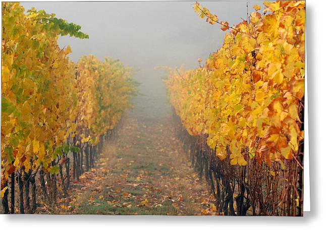 Vintner Photographs Greeting Cards - Fall Vines Greeting Card by Jean Noren