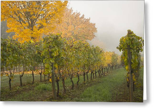 Fall Vineyard Colors Greeting Card by Jean Noren