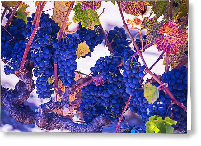 Grape Vineyard Greeting Cards - Fall Wine Grapes Greeting Card by Garry Gay