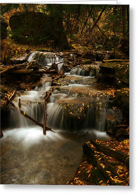 Recently Sold -  - Jeremy Greeting Cards - Fall with Grace Greeting Card by Jeremy Rhoades