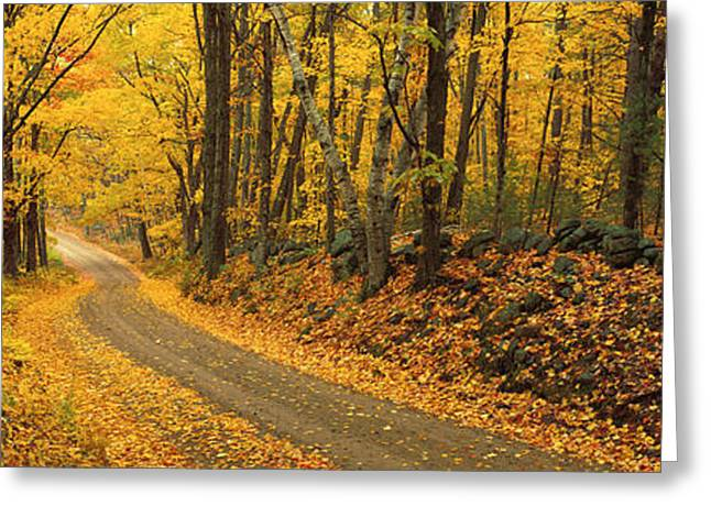 New Hampshire Leaves Greeting Cards - Fall Woods Monadnock Nh Usa Greeting Card by Panoramic Images