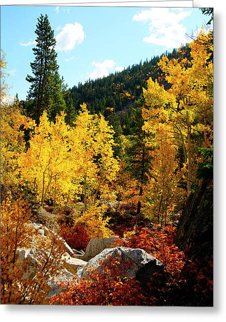 Recently Sold -  - Jeremy Greeting Cards - Fall2 Greeting Card by Jeremy Rhoades