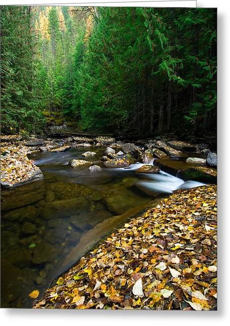 Transitions Greeting Cards - Fallen Autumn Color Leaves And Forest Greeting Card by Panoramic Images