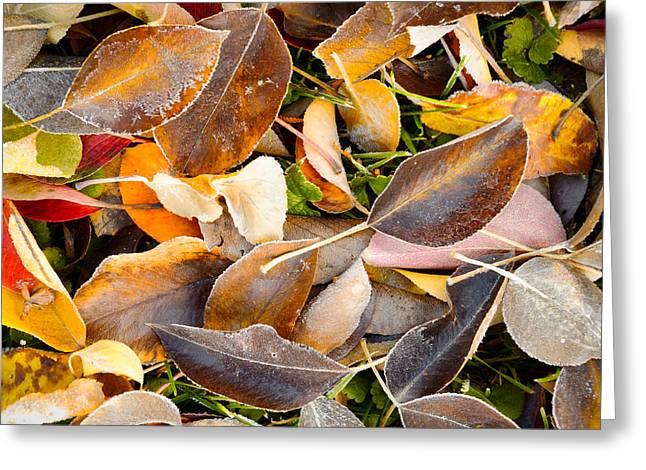Kittitas Valley Greeting Cards - Fallen Autumn Leaves - Kittitas County - Washington - October 2013 Greeting Card by Steve G Bisig