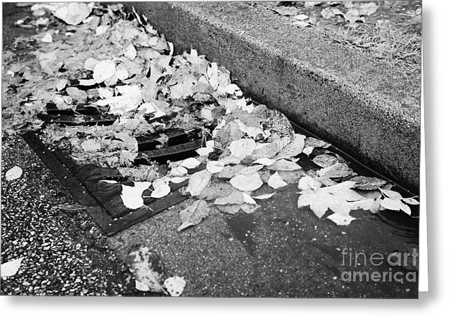 Drain Greeting Cards - fallen autumn leaves blocking storm water run off drain Vancouver BC Canada Greeting Card by Joe Fox