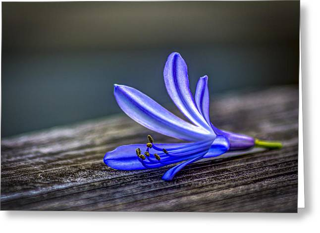 Fallen Beauty Greeting Card by Marvin Spates