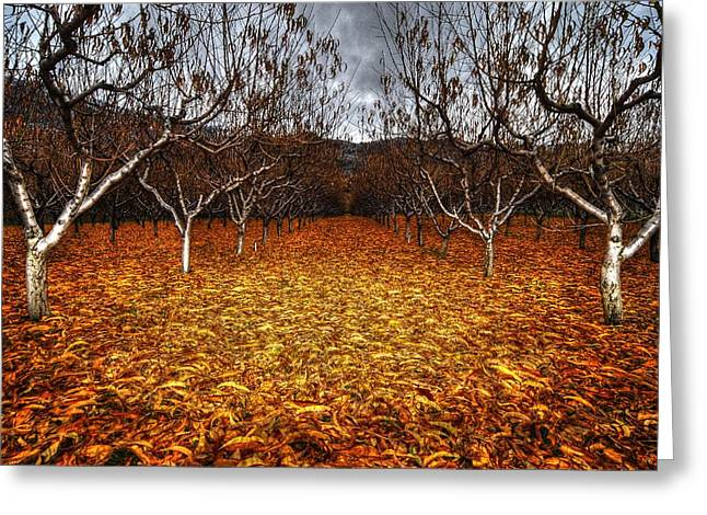 Wesley Allen Shaw Photography Greeting Cards - Fallen Fruit Greeting Card by Wesley Allen Shaw