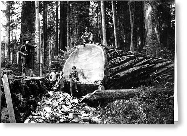 Loggers Greeting Cards - FALLEN GIANT SEQUOIA c. 1890 Greeting Card by Daniel Hagerman