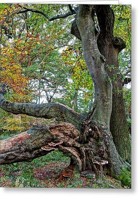 Woodland Scenes Greeting Cards - Fallen Idol Greeting Card by Gill Billington