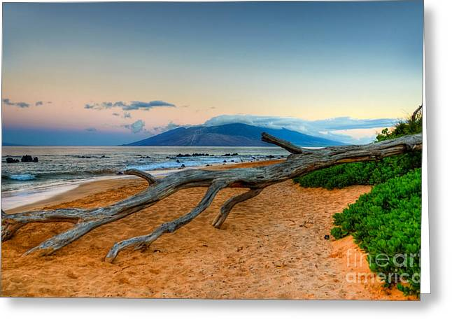 Beach Photographs Greeting Cards - Fallen Island Tree Greeting Card by Kelly Wade