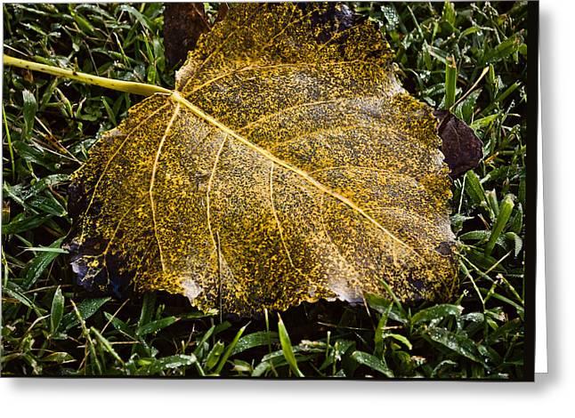 Fallen Leaf On Water Greeting Cards - Fallen Leaf 1 Greeting Card by Greg Jackson