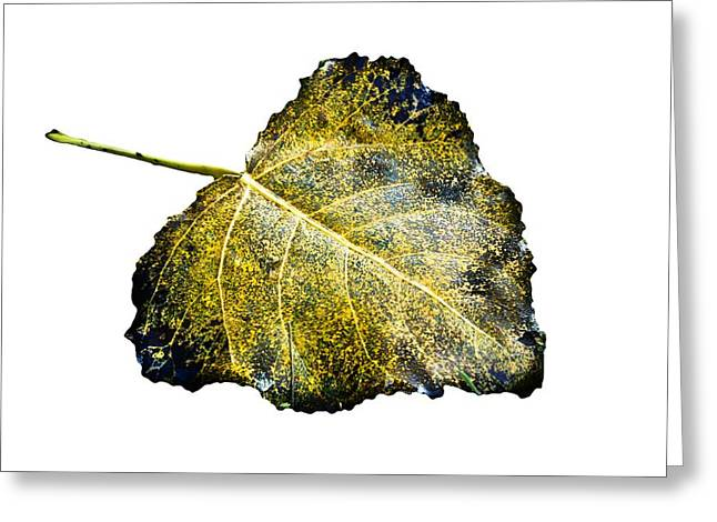 Fallen Leaf On Water Greeting Cards - Fallen Leaf 1T Greeting Card by Greg Jackson