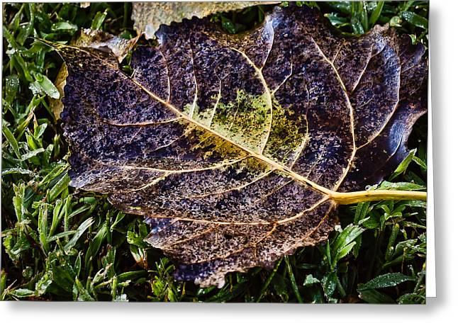 Fallen Leaf On Water Greeting Cards - Fallen Leaf 2 Greeting Card by Greg Jackson