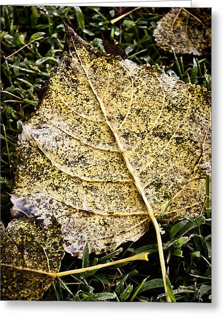 Fallen Leaf On Water Greeting Cards - Fallen Leaf 3 Greeting Card by Greg Jackson