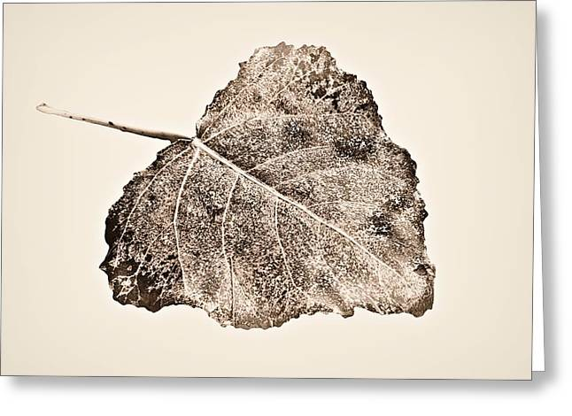 Fallen Leaf On Water Greeting Cards - Fallen Leaf in Antique T Greeting Card by Greg Jackson