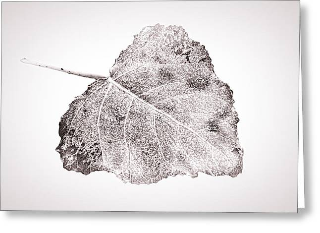 Fallen Leaf On Water Greeting Cards - Fallen Leaf in bwT Greeting Card by Greg Jackson