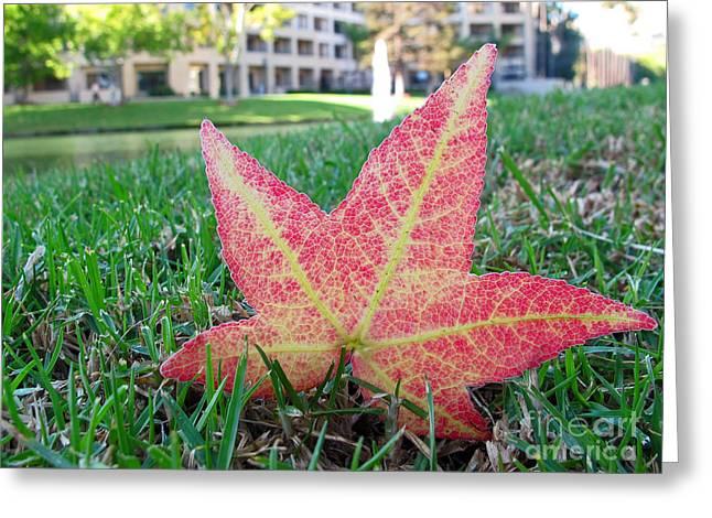 Costa Mesa Greeting Cards - Fallen Leaf Greeting Card by Kelly Holm
