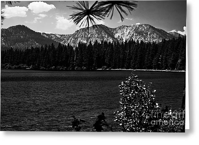 Fallen Leaf Greeting Cards - Fallen Leaf Lake bw Greeting Card by Cheryl Young