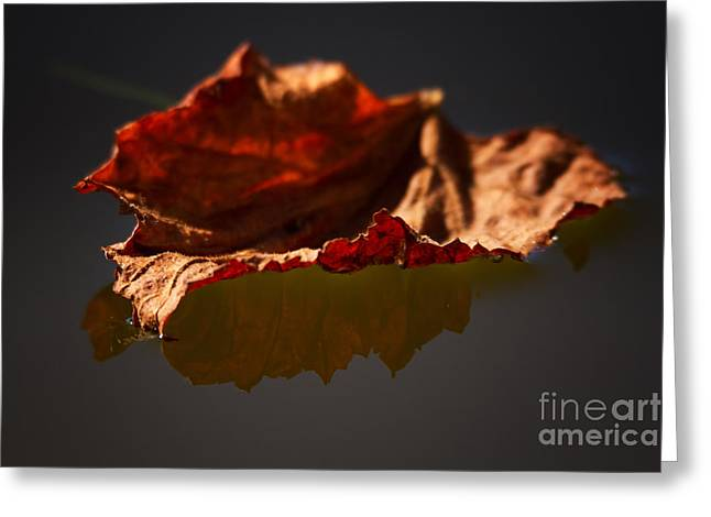 Fallen Leaf Greeting Cards - Fallen Leaf reflecting Greeting Card by Heidi Piccerelli