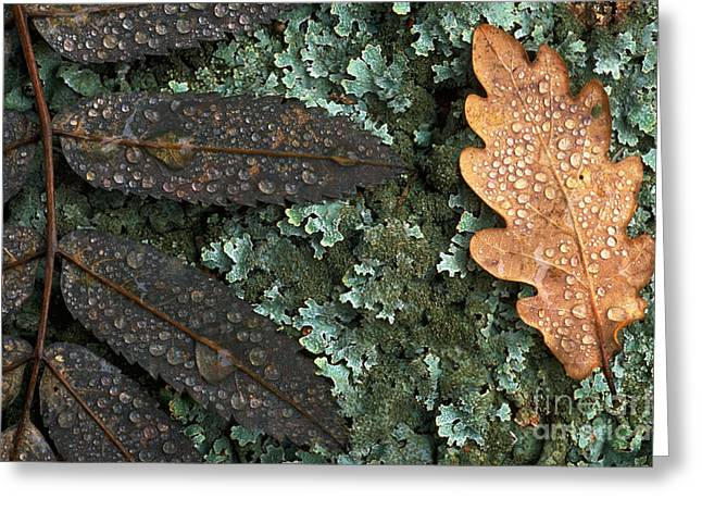 Fallen Leaf Greeting Cards - Fallen Leaves Greeting Card by Art Wolfe