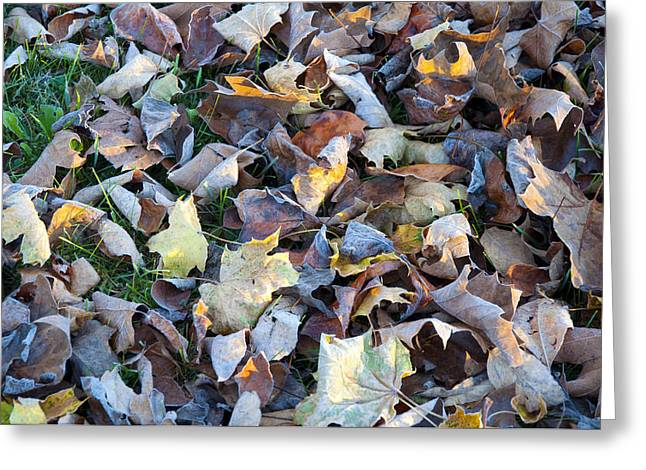 Fallen Leaves Greeting Card by Bill Cannon