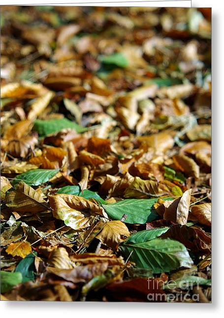 Mottled Greeting Cards - Fallen Leaves Greeting Card by Carlos Caetano