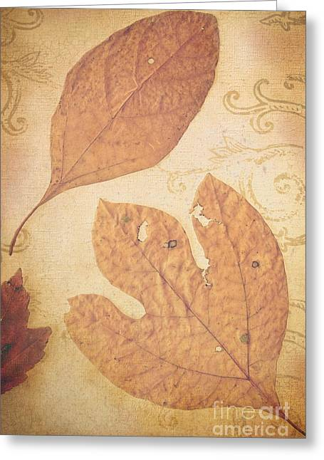 Fallen Leaf Greeting Cards - Fallen Leaves Greeting Card by Colleen Kammerer
