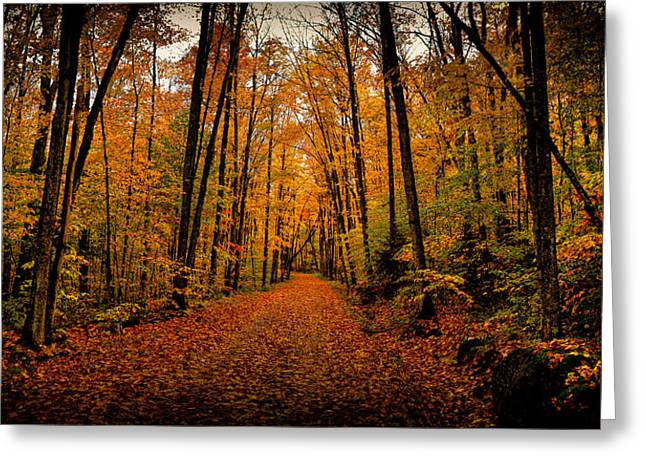 Lanscape Greeting Cards - Fallen Leaves Greeting Card by David Patterson