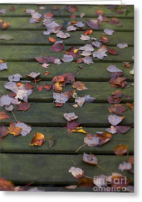 Fallen Leaf Greeting Cards - Fallen leaves Greeting Card by Diane Diederich