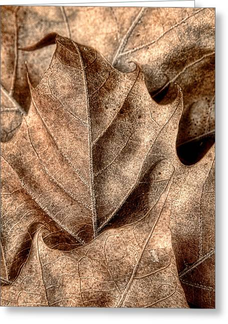 Fallen Leaves I Greeting Card by Tom Mc Nemar