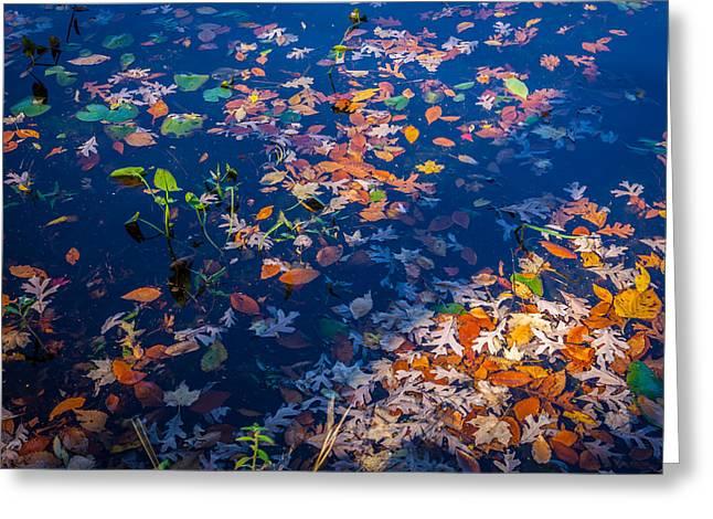 Fallen Leaf Lake Greeting Cards - Fallen Leaves Lake Ames Rockaway Township NJ Painted  Greeting Card by Rich Franco