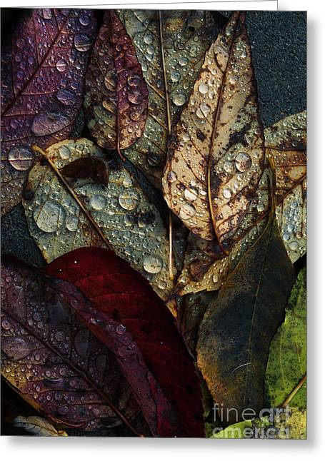 Fallen Leaf Greeting Cards - Fallen Leaves Greeting Card by Mary Machare