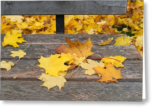 Fallen Leaf Greeting Cards - Fallen Leaves On A Wooden Bench Greeting Card by Panoramic Images