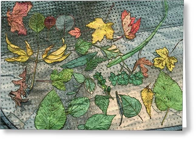 Fallen Leaf Mixed Media Greeting Cards - Fallen Leaves Greeting Card by Pamela Blayney