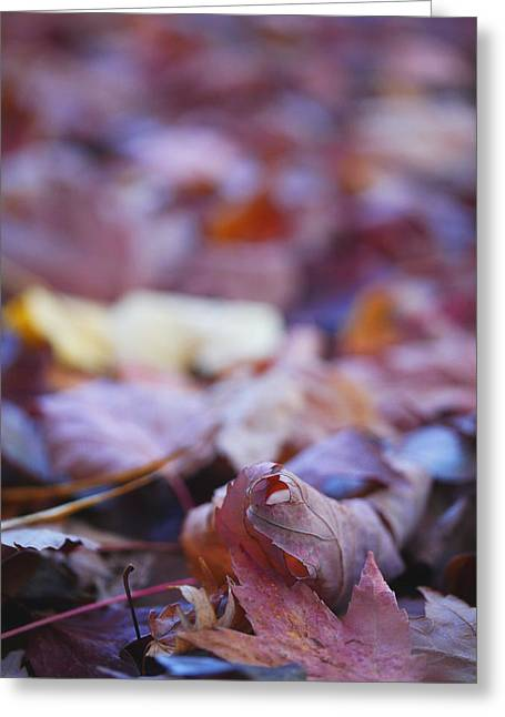 Photos Of Autumn Greeting Cards - Fallen Leaves Road Greeting Card by Irina Wardas