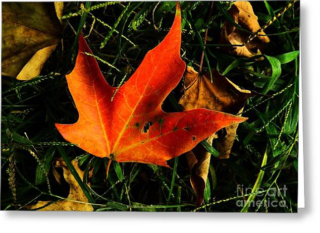 Uplifting Greeting Cards - Fallen Leaves Greeting Card by Robyn King