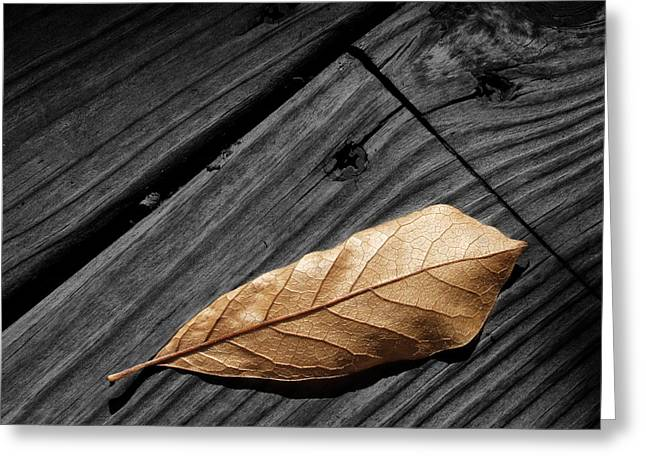 Randy Greeting Cards - Fallen Magnolia Leaf on a Gray Wooden Deck Greeting Card by Randall Nyhof