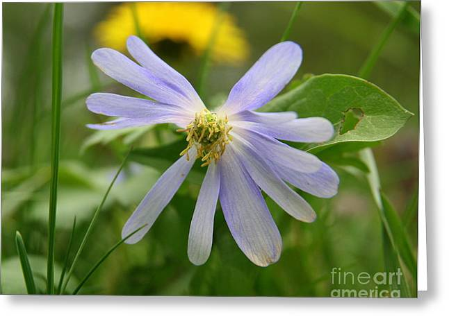 Flower Photos Greeting Cards - Fallen Petals Greeting Card by Neal  Eslinger