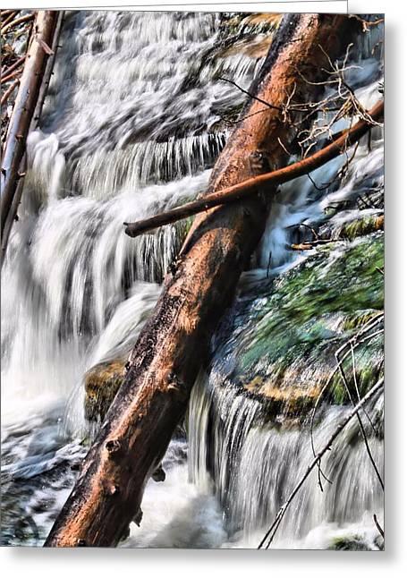 Natural Dam Greeting Cards - Fallen Pines At Tahquamenon Falls Greeting Card by Dan Sproul